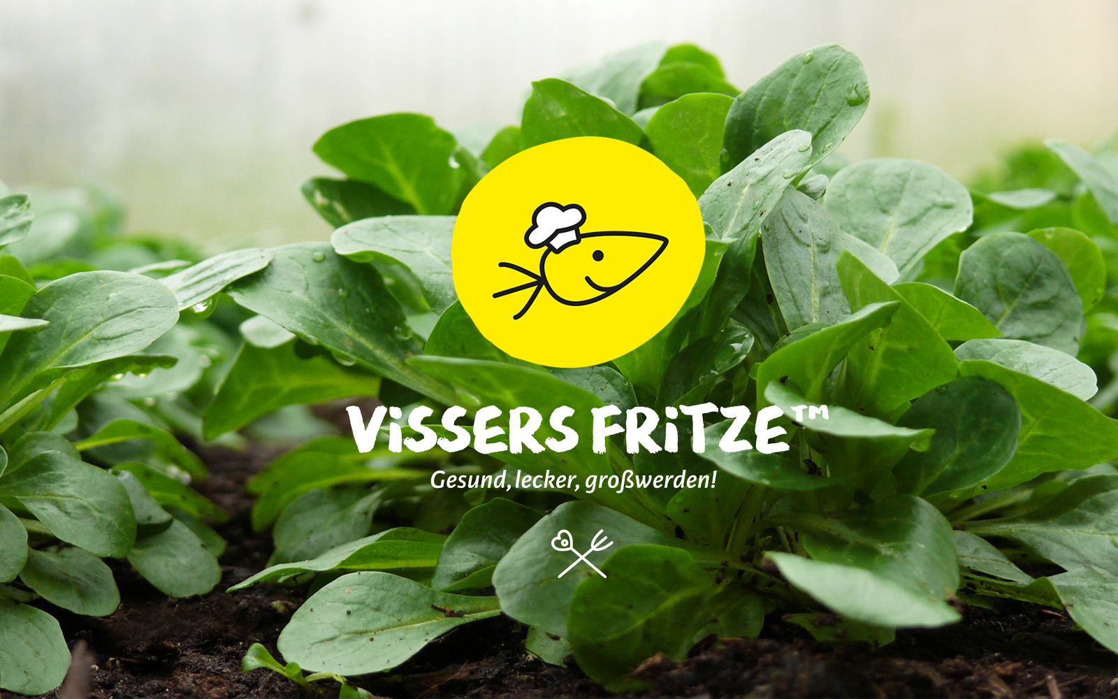 INTRO-DESKTOP-Corporate-Design-Vissers-Fritze-WERTBLICK